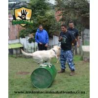 Adiestramiento Canino Presencial